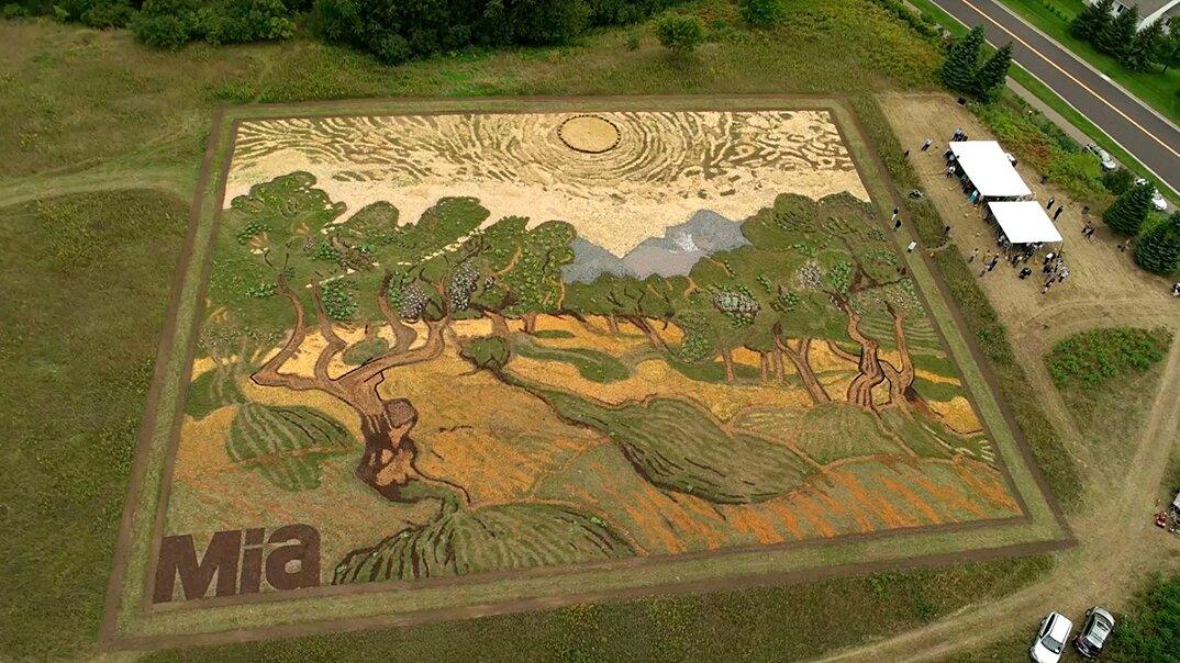 campo-installazione-coltivazione-ulivi-van-gogh-arte-stan-herd-2