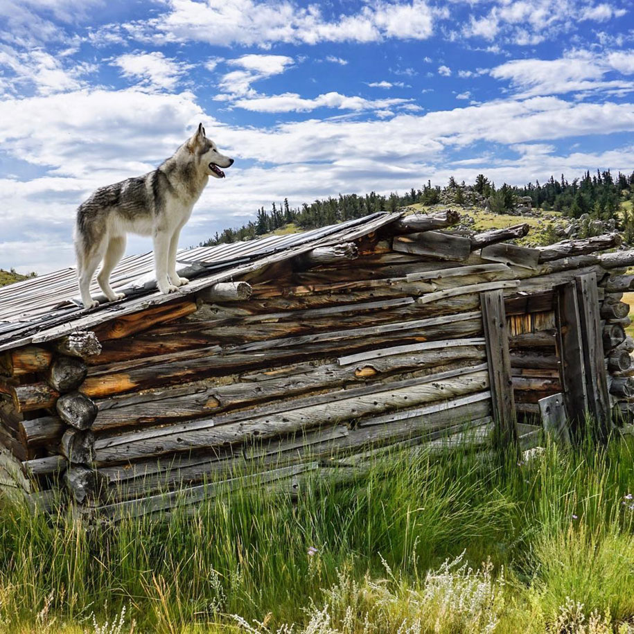 cane-lupo-loki-natura-fotografia-kelly-lund-12