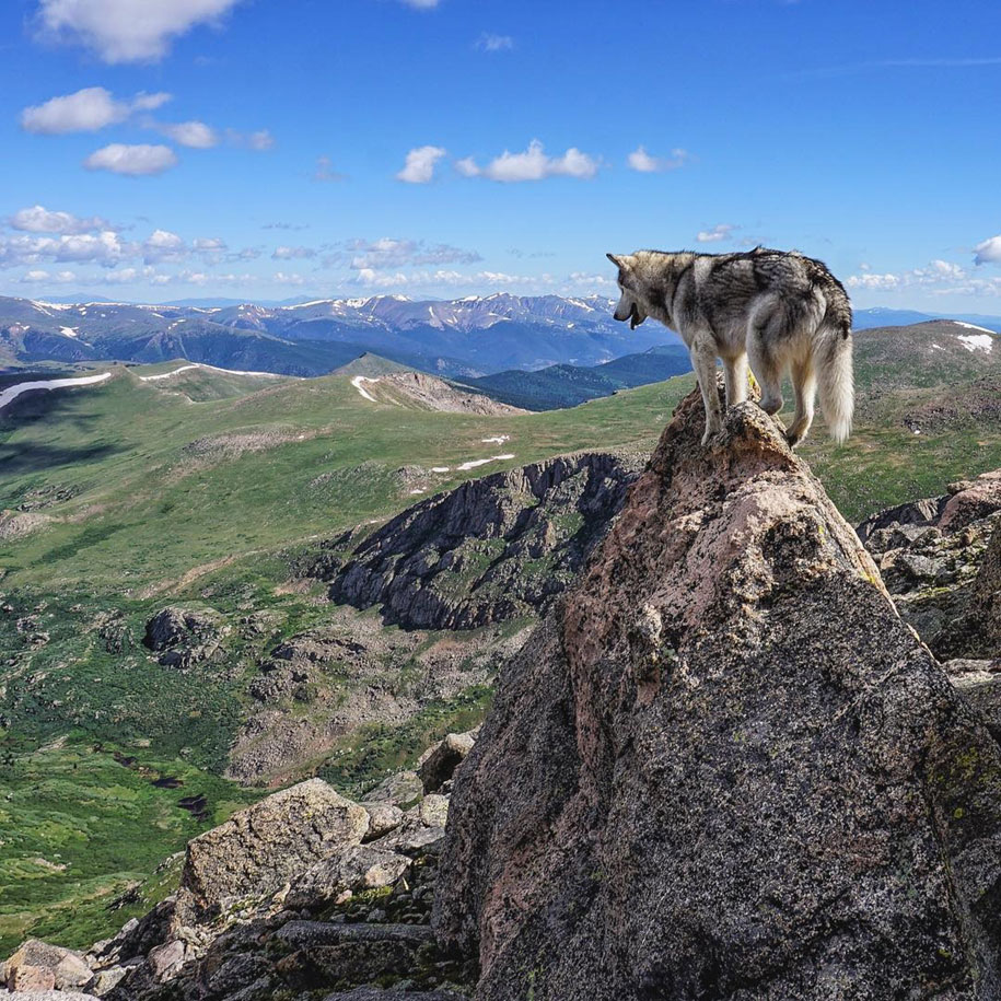 cane-lupo-loki-natura-fotografia-kelly-lund-14
