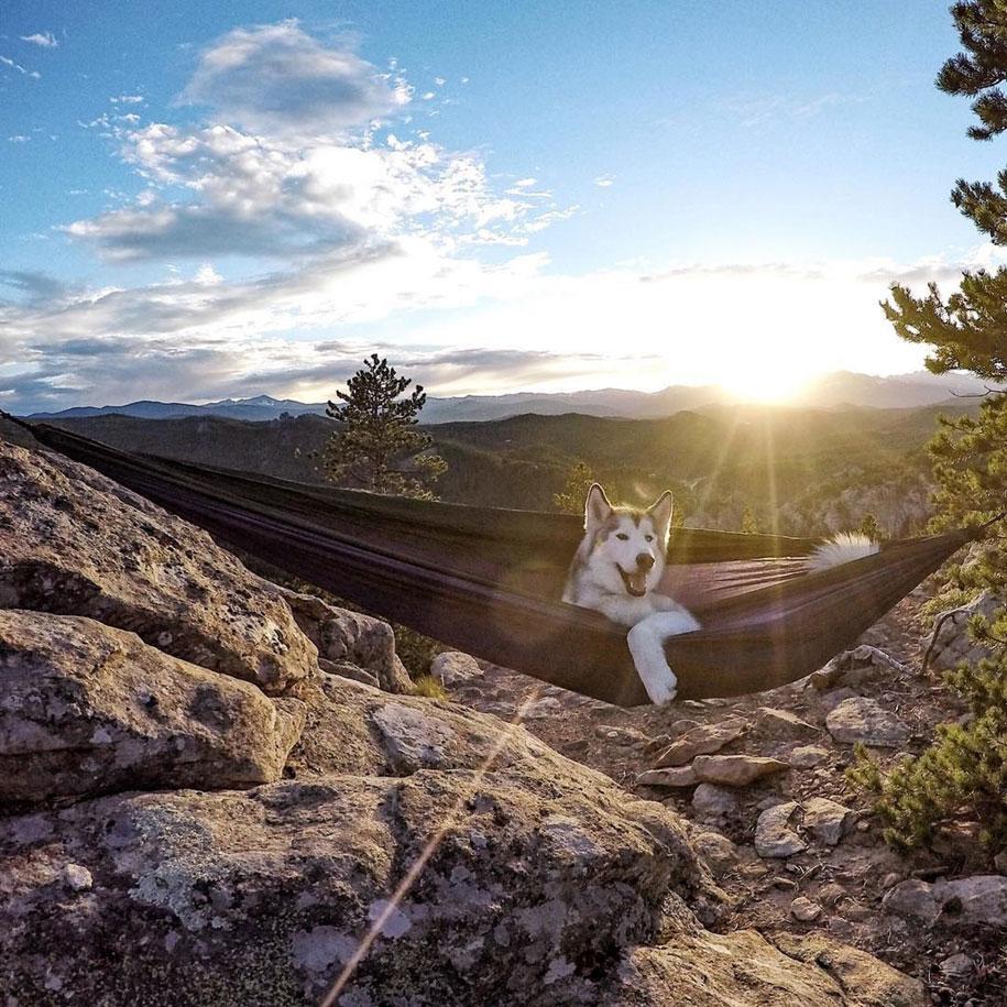 cane-lupo-loki-natura-fotografia-kelly-lund-18