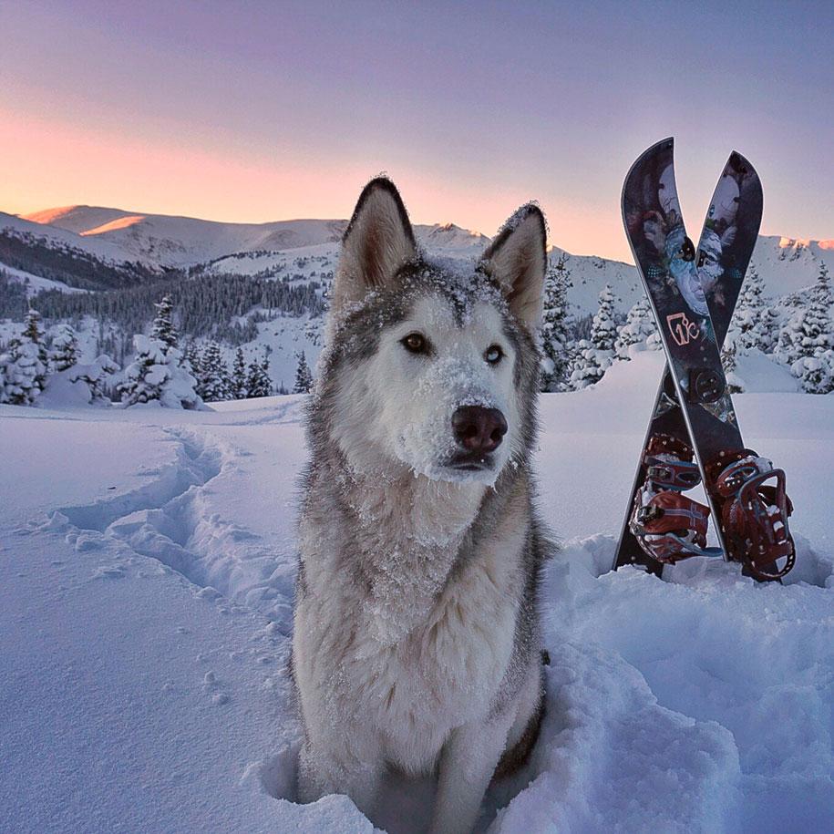cane-lupo-loki-natura-fotografia-kelly-lund-20