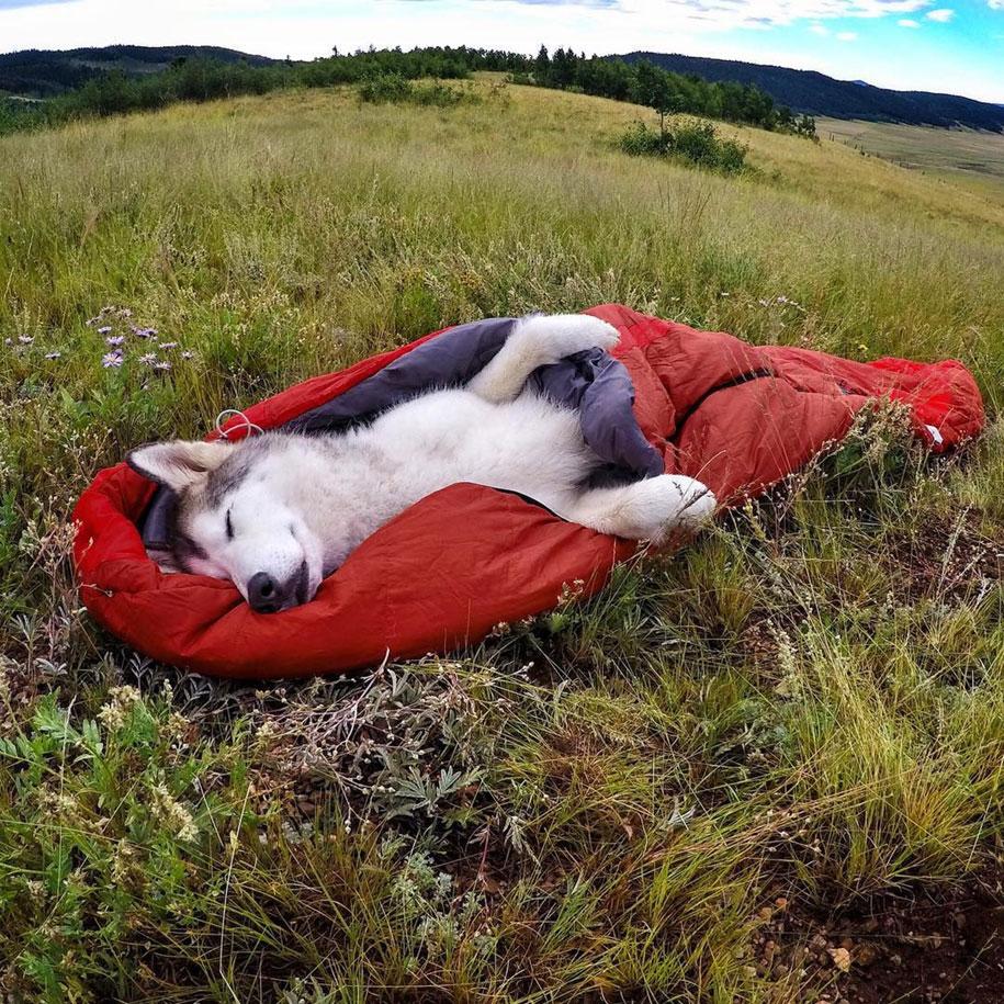 cane-lupo-loki-natura-fotografia-kelly-lund-22