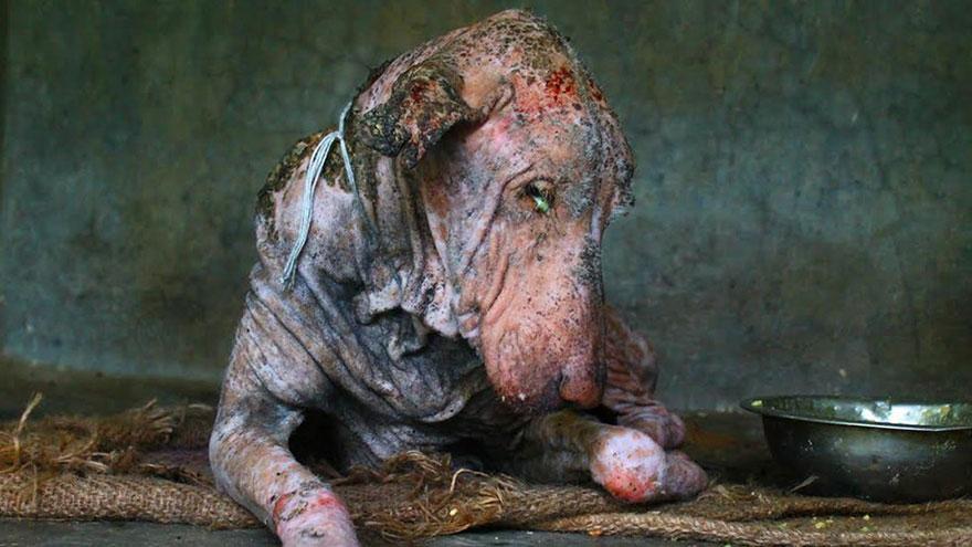 cane-malato-rogna-salvato-animal-aid-unlimited-1