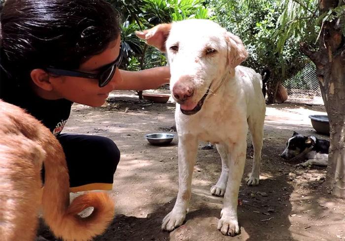 cane-malato-rogna-salvato-animal-aid-unlimited-2