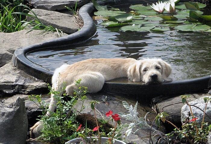 cani-che-dormono-in-posizioni-assurde-scomode-14