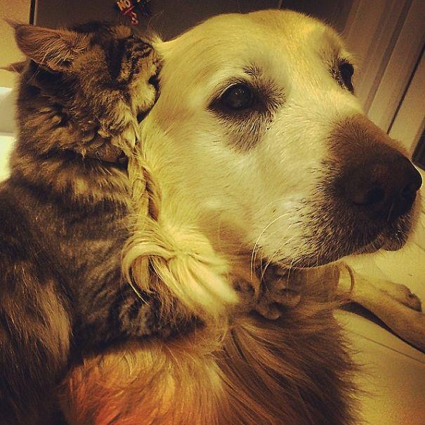 cani-e-gatti-che-vanno-in-accordo-01