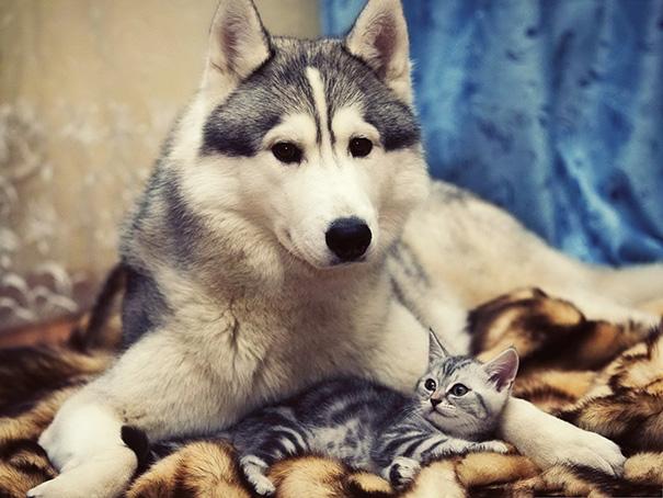 cani-e-gatti-che-vanno-in-accordo-02