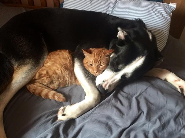 cani-e-gatti-che-vanno-in-accordo-04