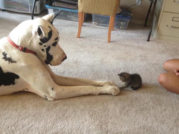 cani-e-gatti-che-vanno-in-accordo-05
