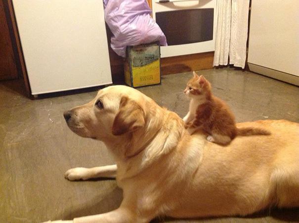 cani-e-gatti-che-vanno-in-accordo-07