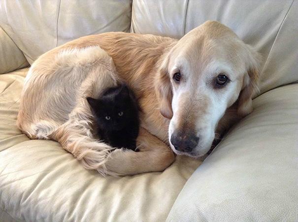 cani-e-gatti-che-vanno-in-accordo-08