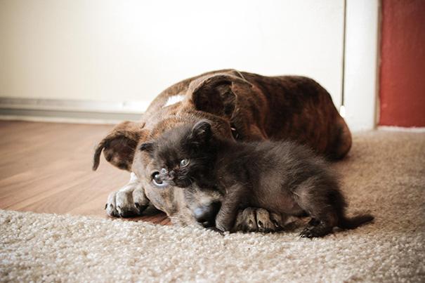 cani-e-gatti-che-vanno-in-accordo-10