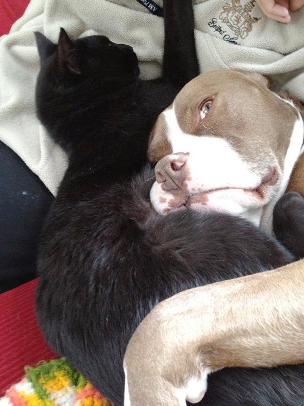 cani-e-gatti-che-vanno-in-accordo-13