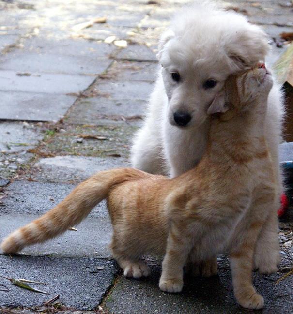 cani-e-gatti-che-vanno-in-accordo-19