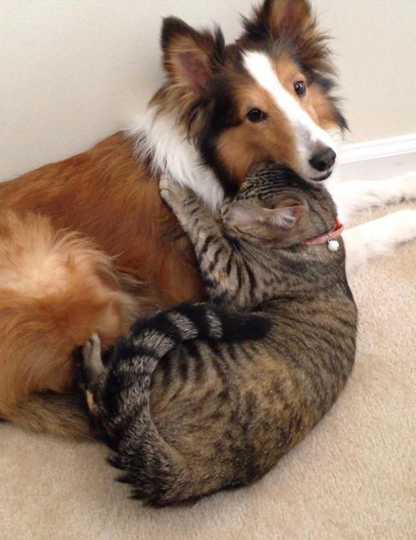 cani-e-gatti-che-vanno-in-accordo-20