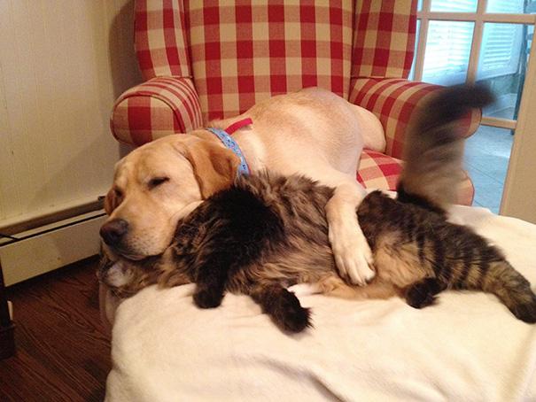 cani-e-gatti-che-vanno-in-accordo-21