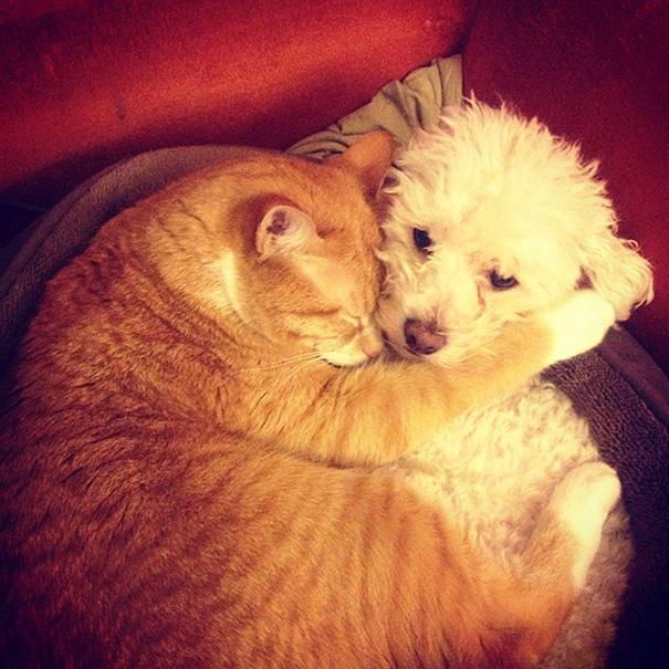 cani-e-gatti-che-vanno-in-accordo-23