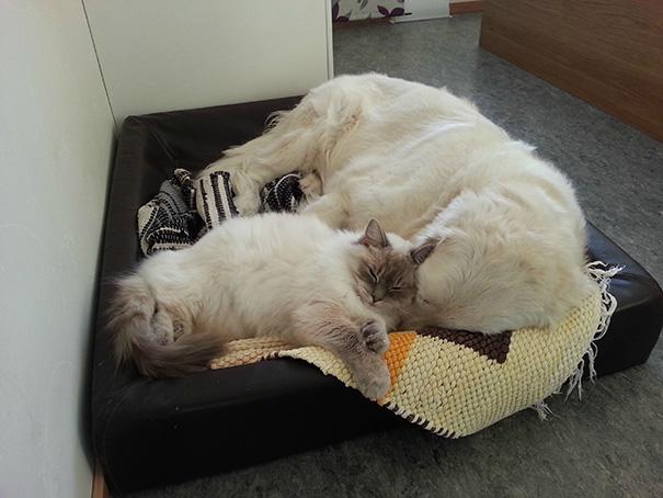 cani-e-gatti-che-vanno-in-accordo-24