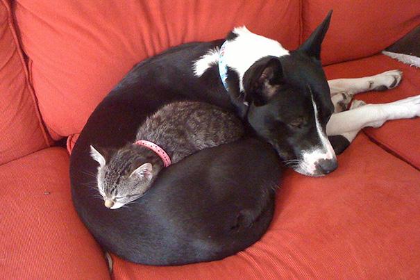 cani-e-gatti-che-vanno-in-accordo-25