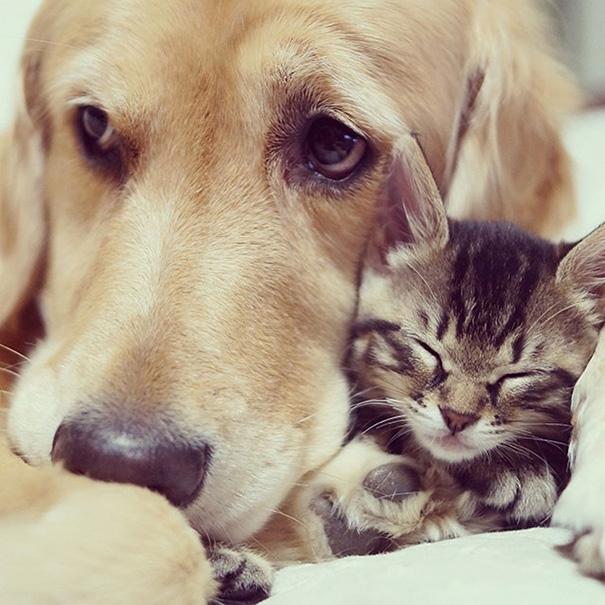 cani-e-gatti-che-vanno-in-accordo-26