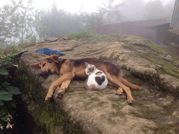 cani-e-gatti-che-vanno-in-accordo-27
