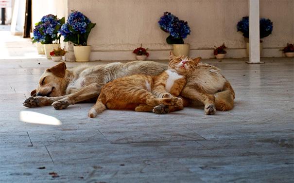 cani-e-gatti-che-vanno-in-accordo-28