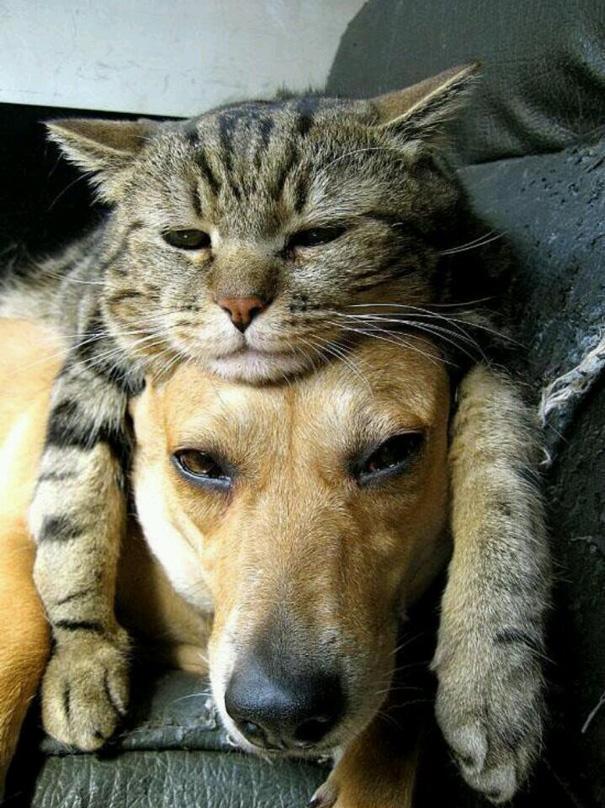 cani-e-gatti-che-vanno-in-accordo-30