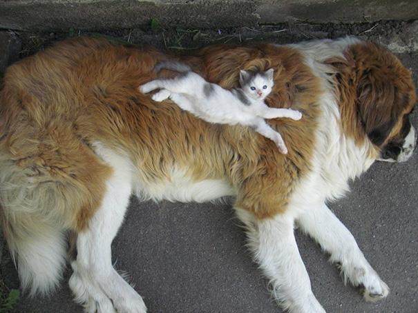 cani-e-gatti-che-vanno-in-accordo-31
