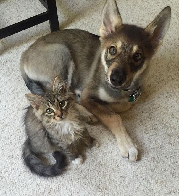 cani-e-gatti-che-vanno-in-accordo-35