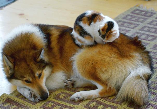 cani-e-gatti-che-vanno-in-accordo-36