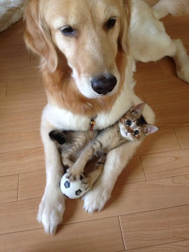 cani-e-gatti-che-vanno-in-accordo-39