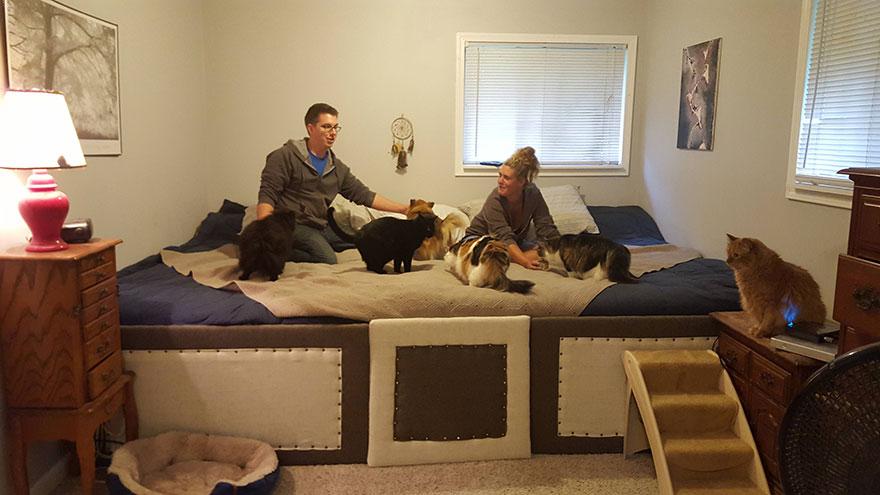 cani-gatti-mega-letto-gigante-dormire-insieme-2