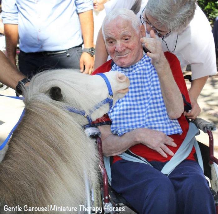 cavelli-nani-animali-terapia-disabili-malati-therapy-horses-1