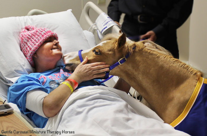 cavelli-nani-animali-terapia-disabili-malati-therapy-horses-2