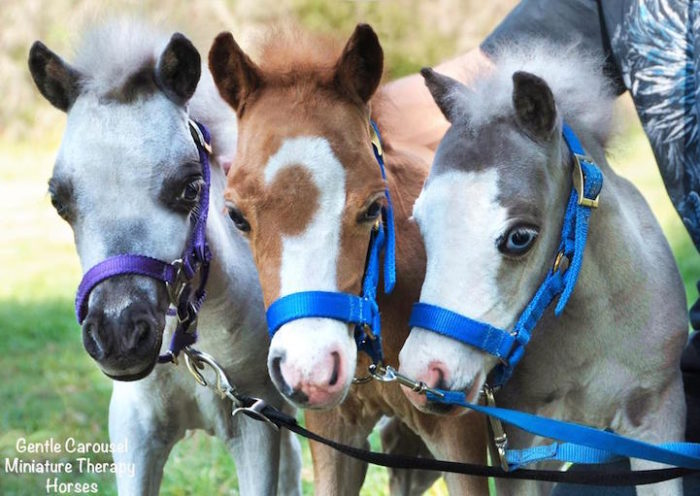 cavelli-nani-animali-terapia-disabili-malati-therapy-horses-3