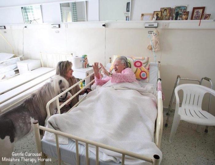 cavelli-nani-animali-terapia-disabili-malati-therapy-horses-4