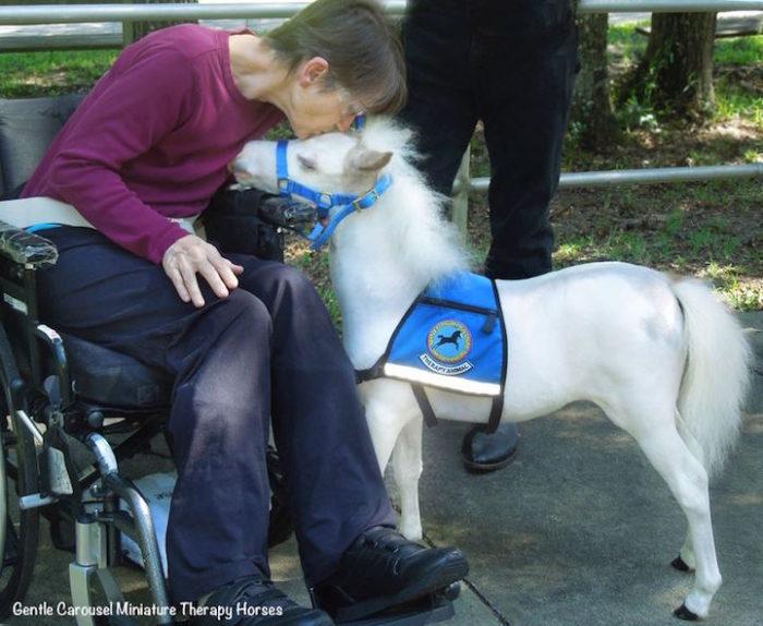 cavelli-nani-animali-terapia-disabili-malati-therapy-horses-5