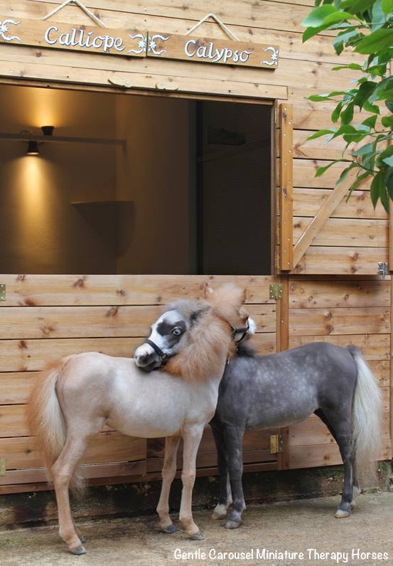 cavelli-nani-animali-terapia-disabili-malati-therapy-horses-6