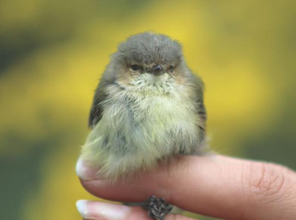 concorso-animali-carini-terra-cuteoff-twitter-18