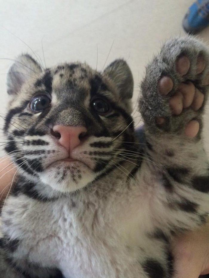 Favoloso immagini simpatiche animali - KEBLOG YH67