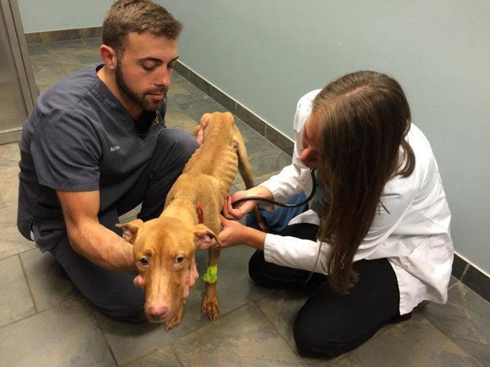 due-cani-affamati-scheletrici-soccorsi-trasformati-4