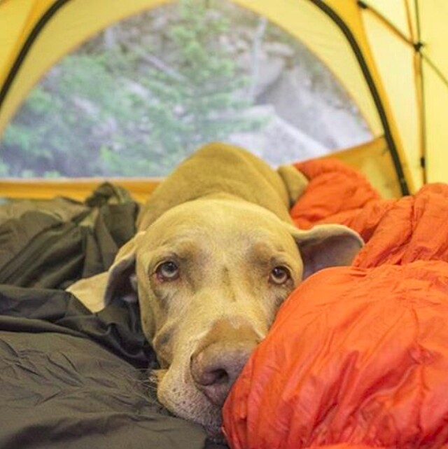 foto-cani-campeggio-trekking-hicking-natura-instagram-camping-with-dogs-04-keb