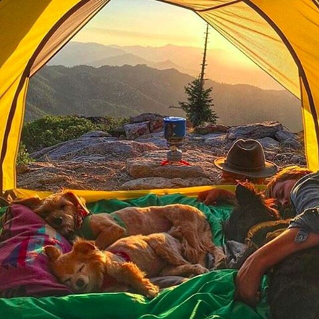 foto-cani-campeggio-trekking-hicking-natura-instagram-camping-with-dogs-07-keb