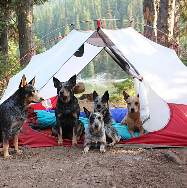 foto-cani-campeggio-trekking-hicking-natura-instagram-camping-with-dogs-09-keb
