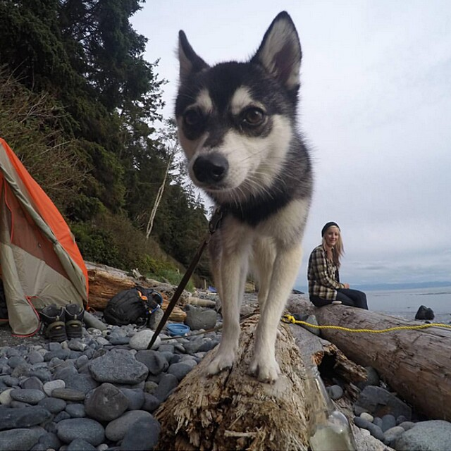 foto-cani-campeggio-trekking-hicking-natura-instagram-camping-with-dogs-10-keb