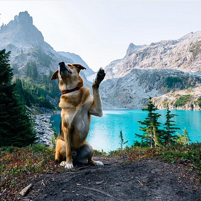 foto-cani-campeggio-trekking-hicking-natura-instagram-camping-with-dogs-11-keb