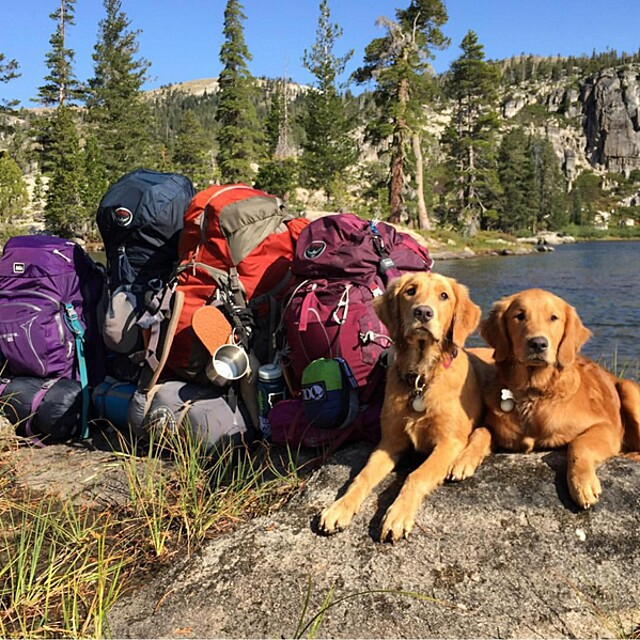 foto-cani-campeggio-trekking-hicking-natura-instagram-camping-with-dogs-12-keb