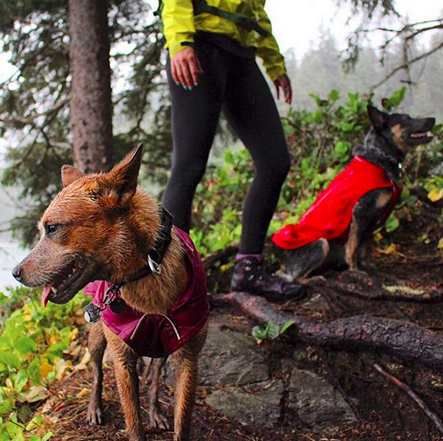 foto-cani-campeggio-trekking-hicking-natura-instagram-camping-with-dogs-13-keb