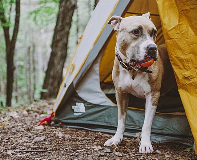 foto-cani-campeggio-trekking-hicking-natura-instagram-camping-with-dogs-14-keb