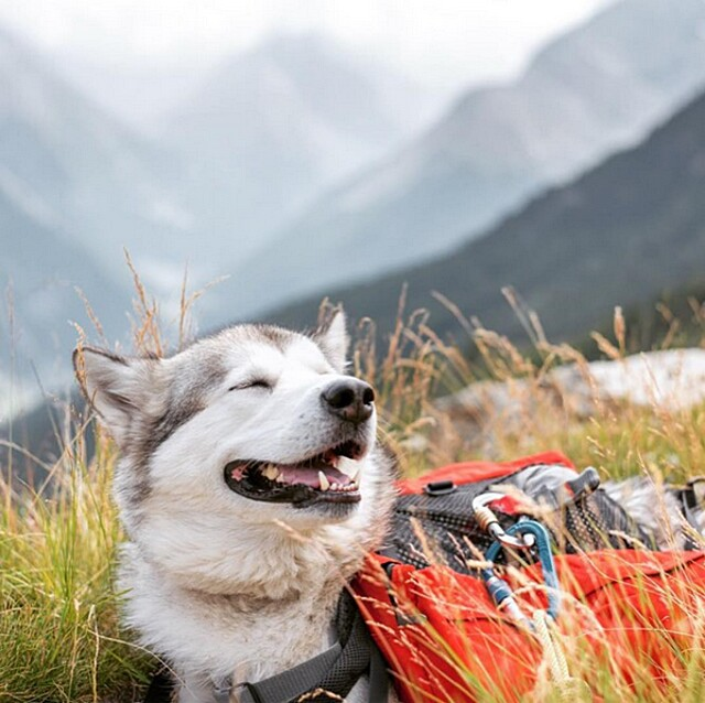 foto-cani-campeggio-trekking-hicking-natura-instagram-camping-with-dogs-15-keb